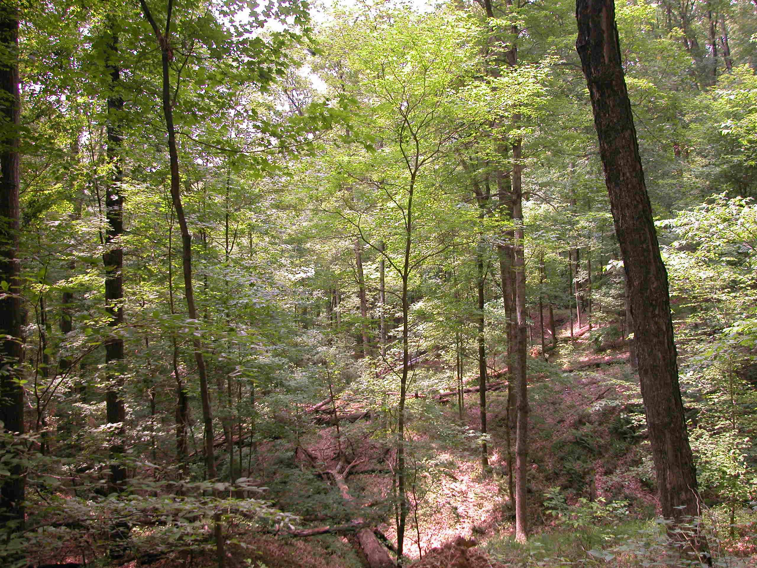 A ravine at Lilly-Dickey Woods.